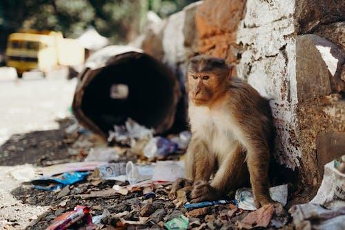 Fotos de stock gratuitas de animal, basura, desordenado