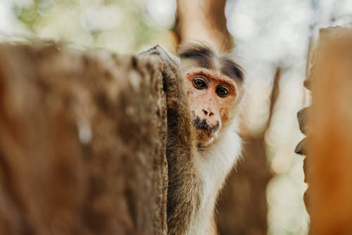 Selective Focus Photo of Monkey