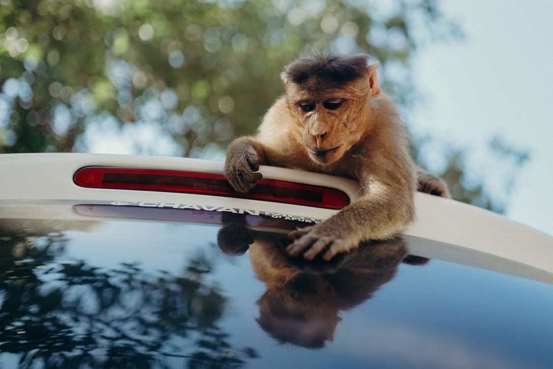 Shallow Focus Photo of Monkey