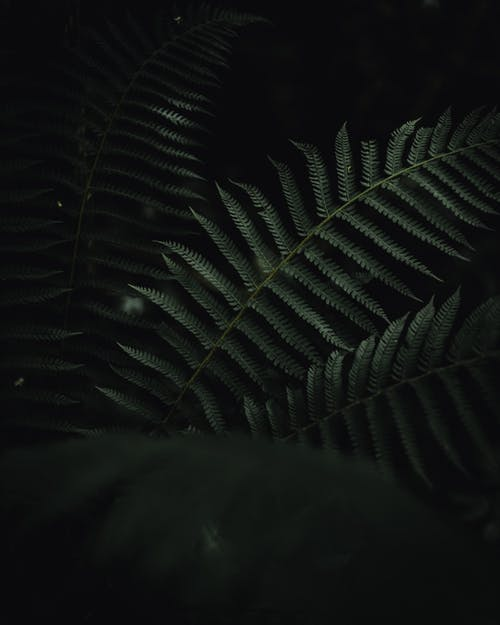 Free stock photo of dark green, dark green leaves, Dark Leaves, forest