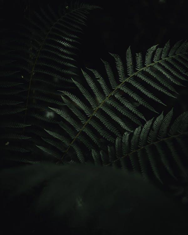 Free stock photo of dark green, dark green leaves, Dark Leaves