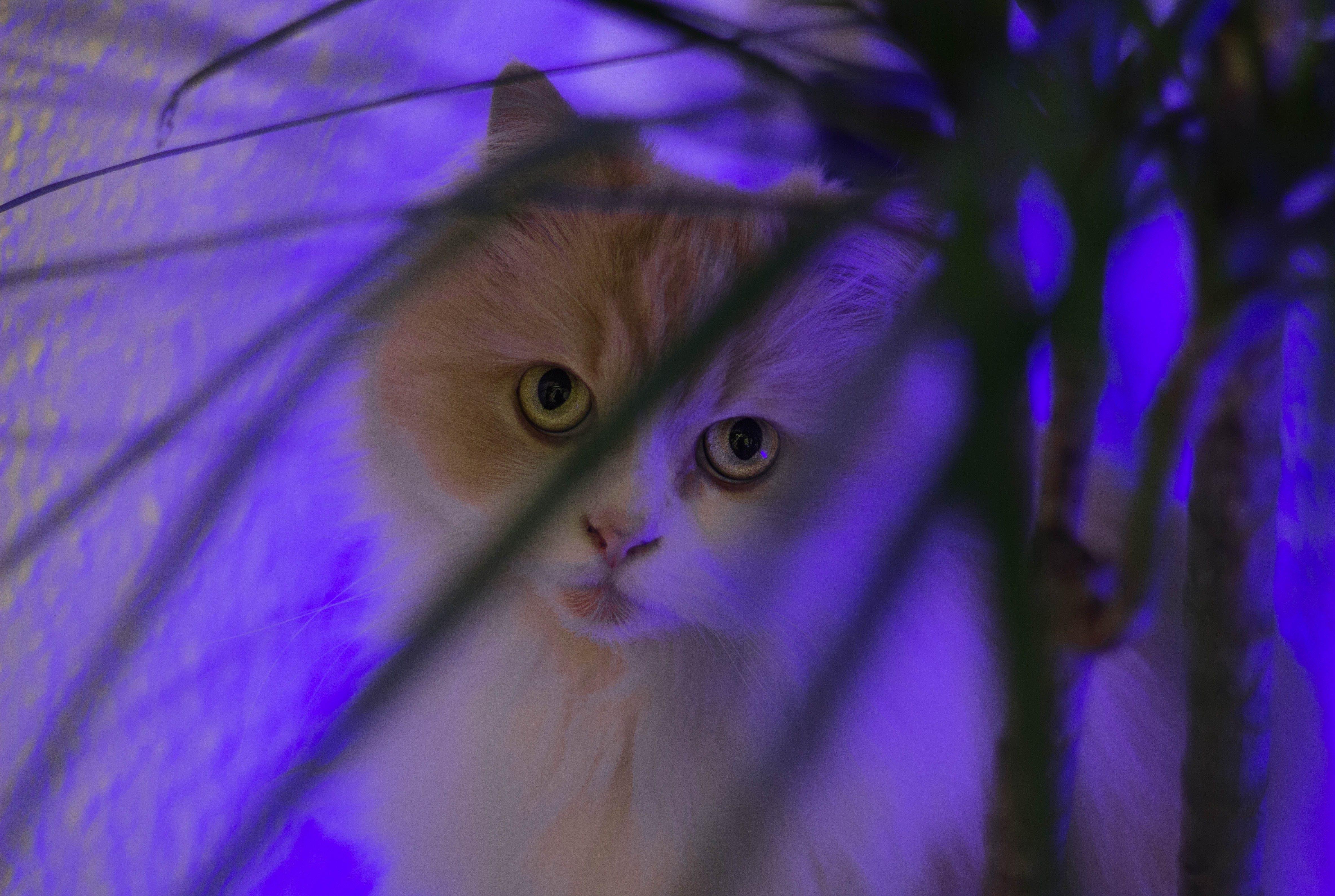 Ilmainen kuvapankkikuva tunnisteilla eläin, eläinkuvaus, kissa, lemmikki