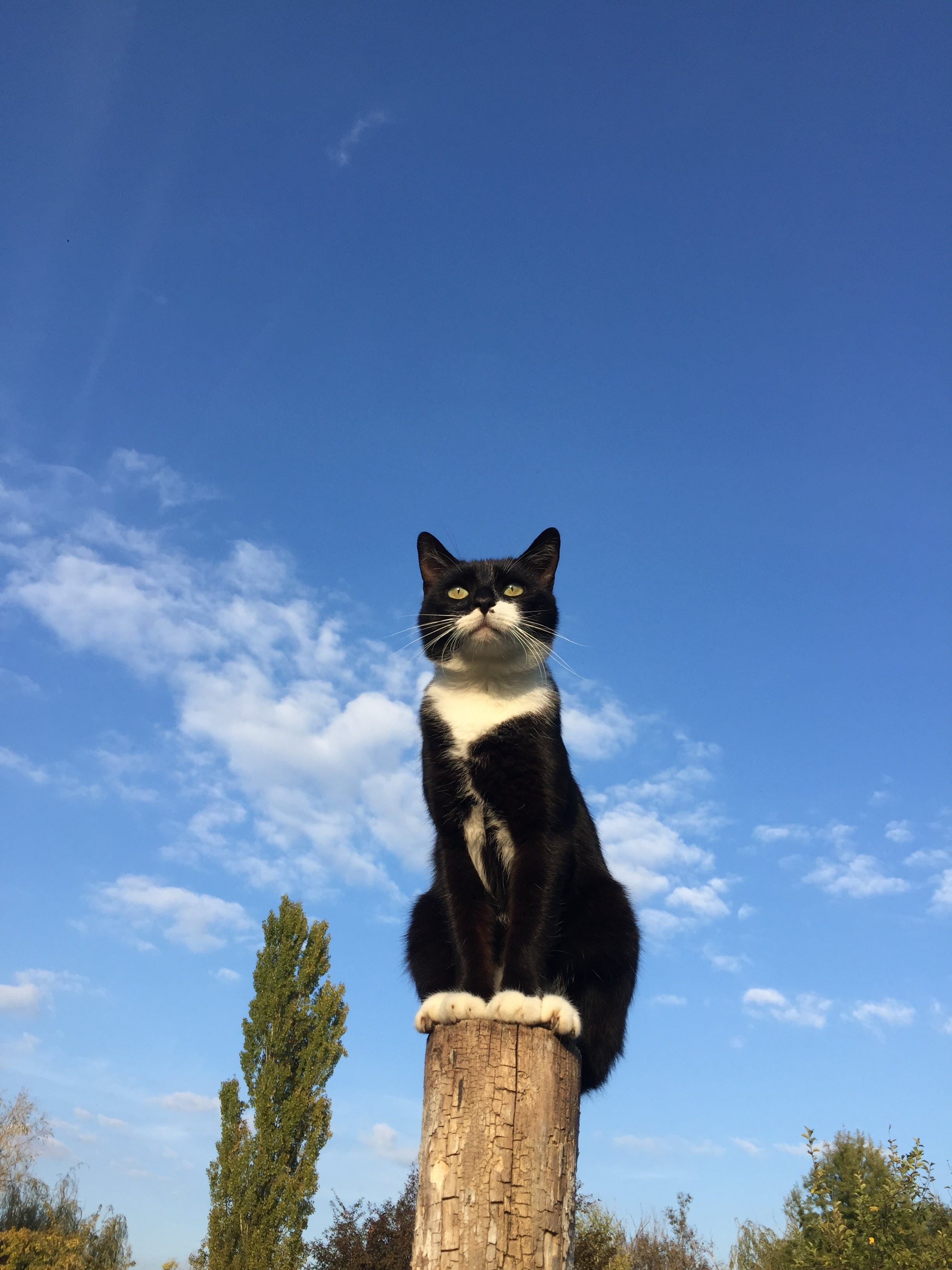 Free stock photo of blue sky, cat, post, sitting