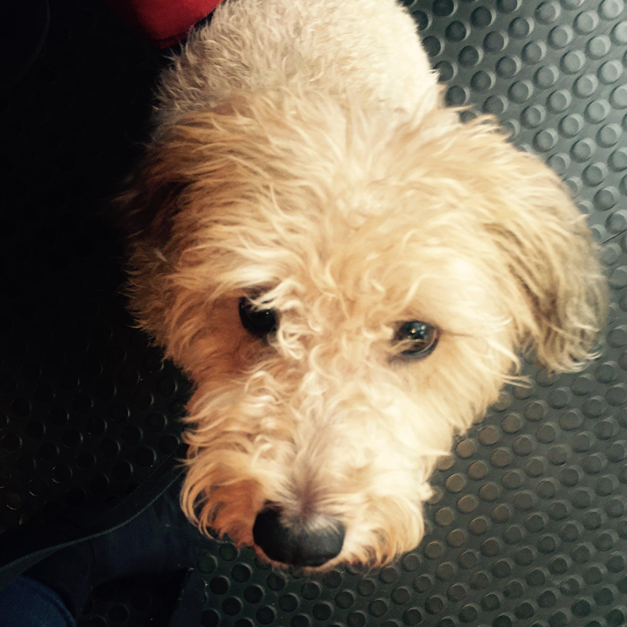 Free stock photo of dog, cute animals, dog face