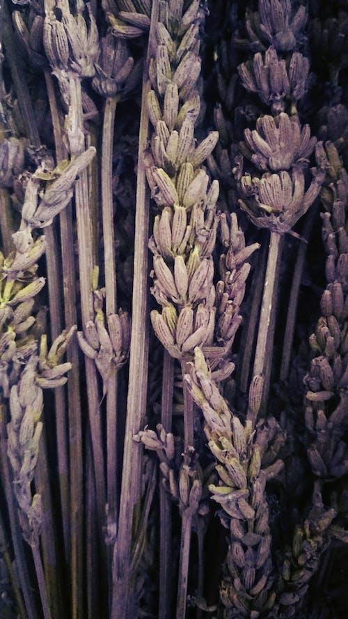 Ilmainen kuvapankkikuva tunnisteilla flores silvestres, morado, violeta, violetti