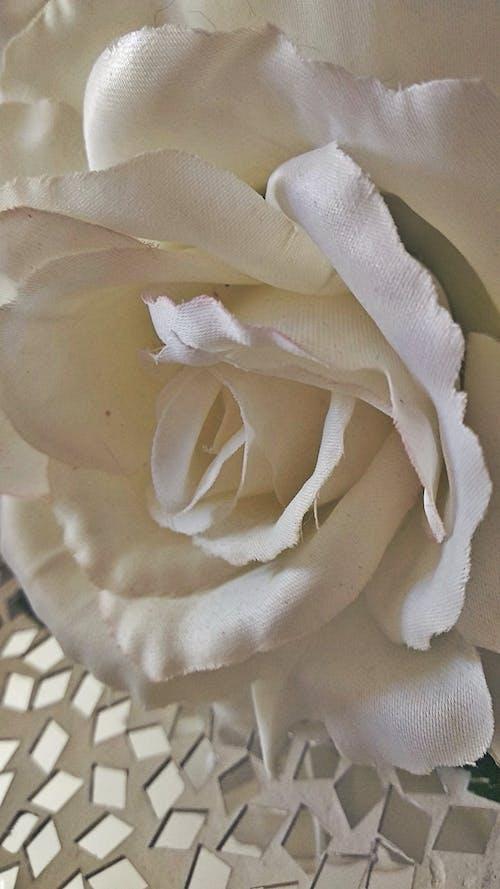 Ilmainen kuvapankkikuva tunnisteilla kukat, ramo de flores, ramo de rosas, rosa blanca