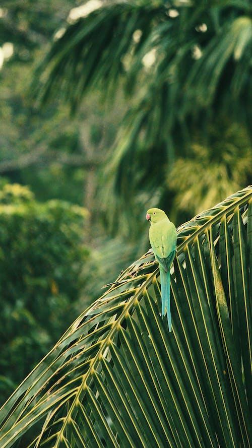 Green Bird on Palm Tree