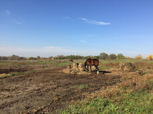 Free stock photo of eating, field, horse, nature