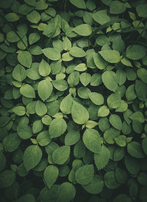 Бесплатное стоковое фото с безмятежный, ботаника, ботанический