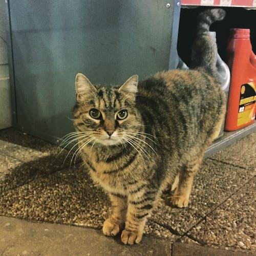 Free stock photo of cat, petrol station