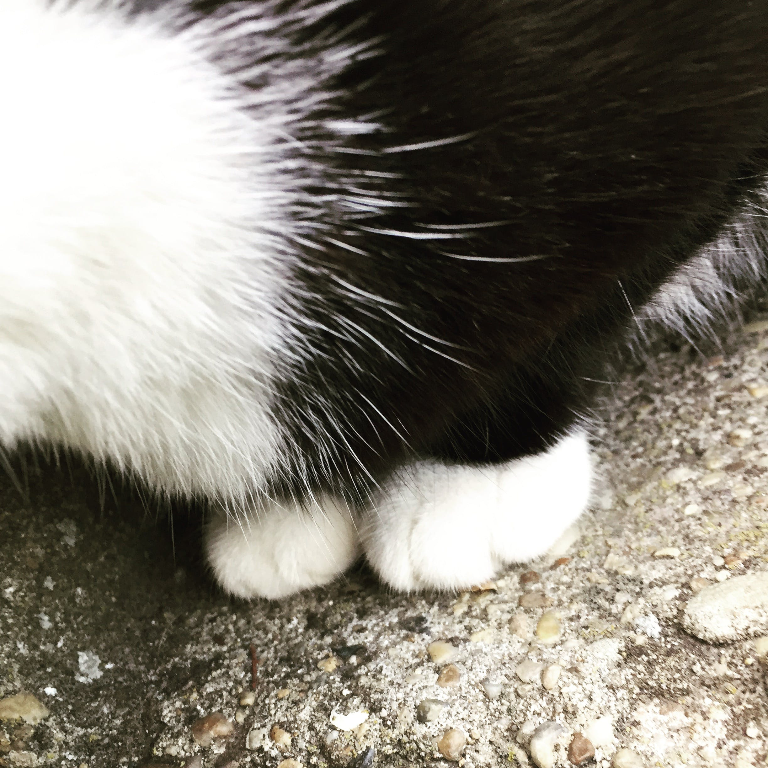 Free stock photo of cat, paws, paw