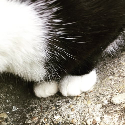 Free stock photo of cat, paw, paws