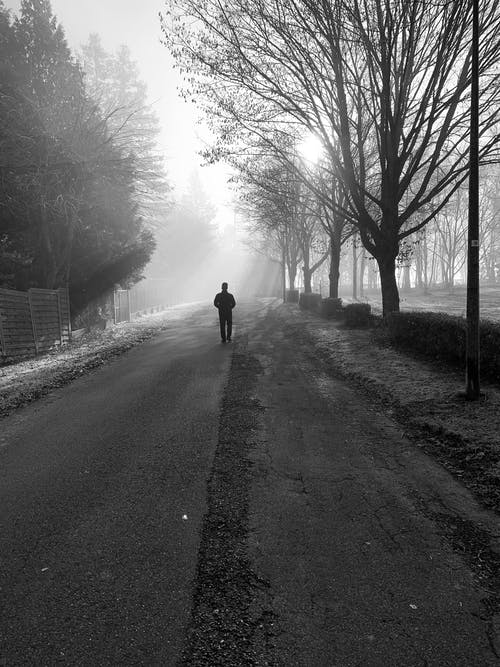 Person Walking on Street Between Bare Trees