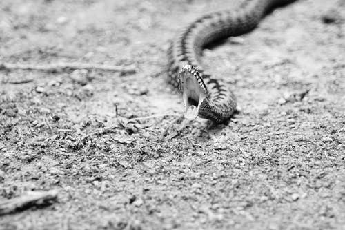 Free stock photo of animal, attaque, crocs