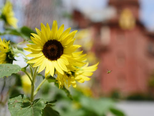 Free stock photo of flower, sunny, yellow