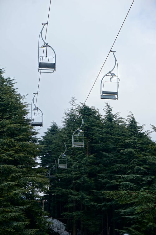 Cable Car over Green Trees