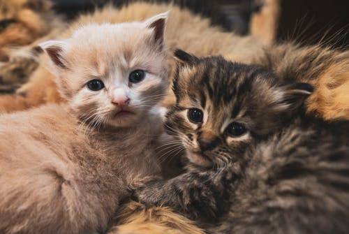 Adorable kitties on soft plaid at home