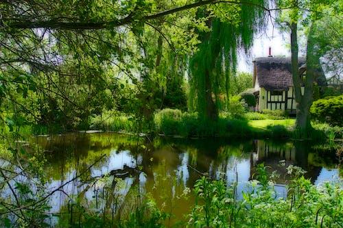 Ingyenes stockfotó angol vidék, erdőség, kunyhó, tavacska témában