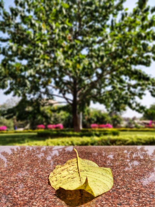 Free stock photo of beauty in nature, beauty of nature, Big leaf