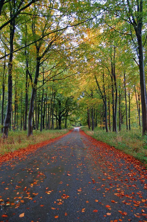 Photo of Pathway Between Green Trees