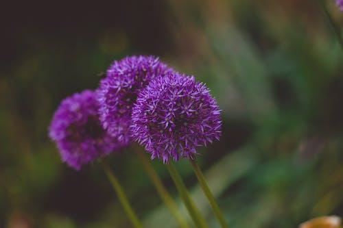 Gratis stockfoto met blad, bloeiend, bloem, bloemblaadje