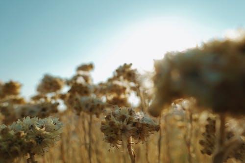 Darmowe zdjęcie z galerii z kwiaty, matka natura, natura