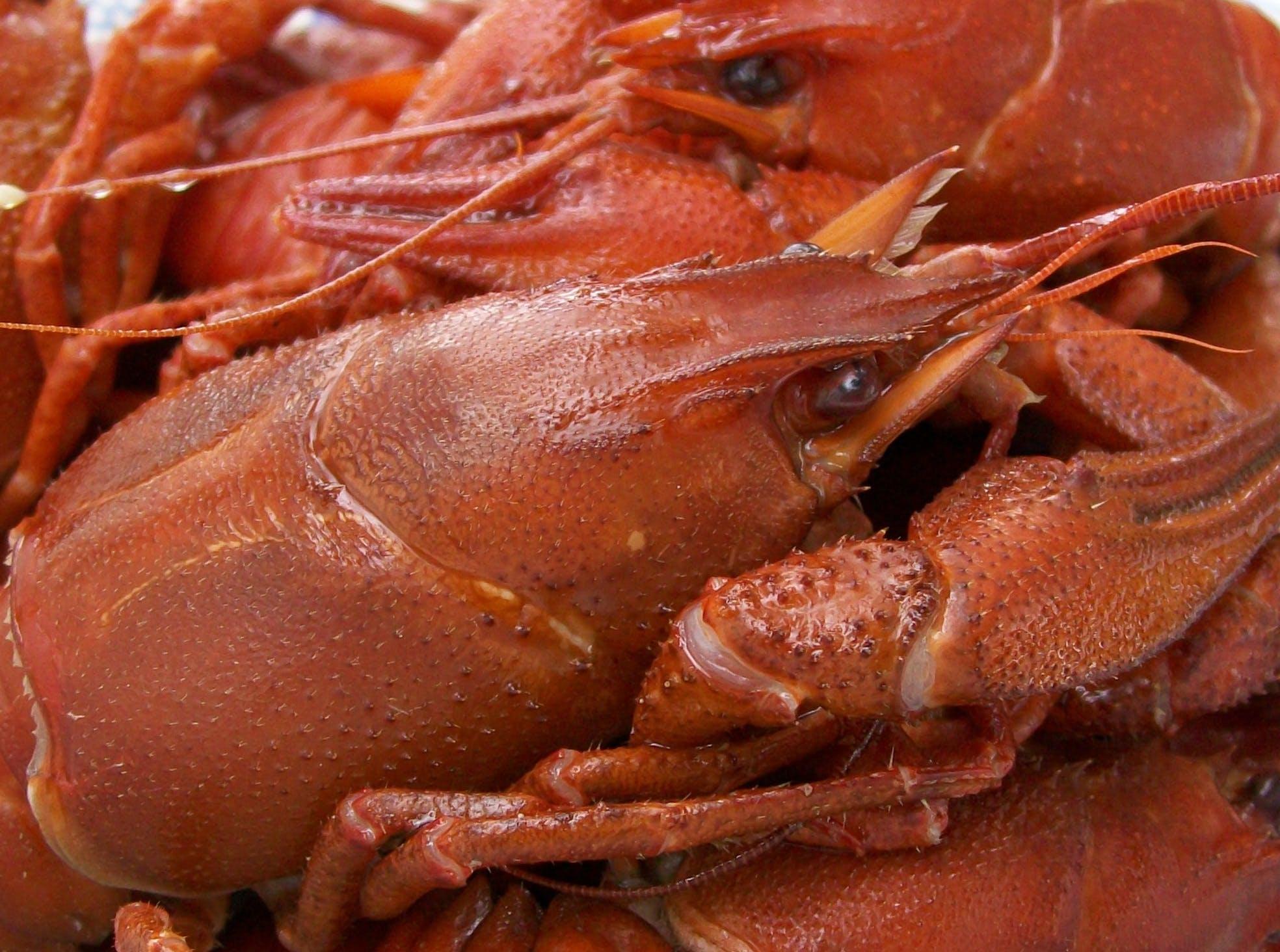 Free stock photo of crawfish, crayfish, food