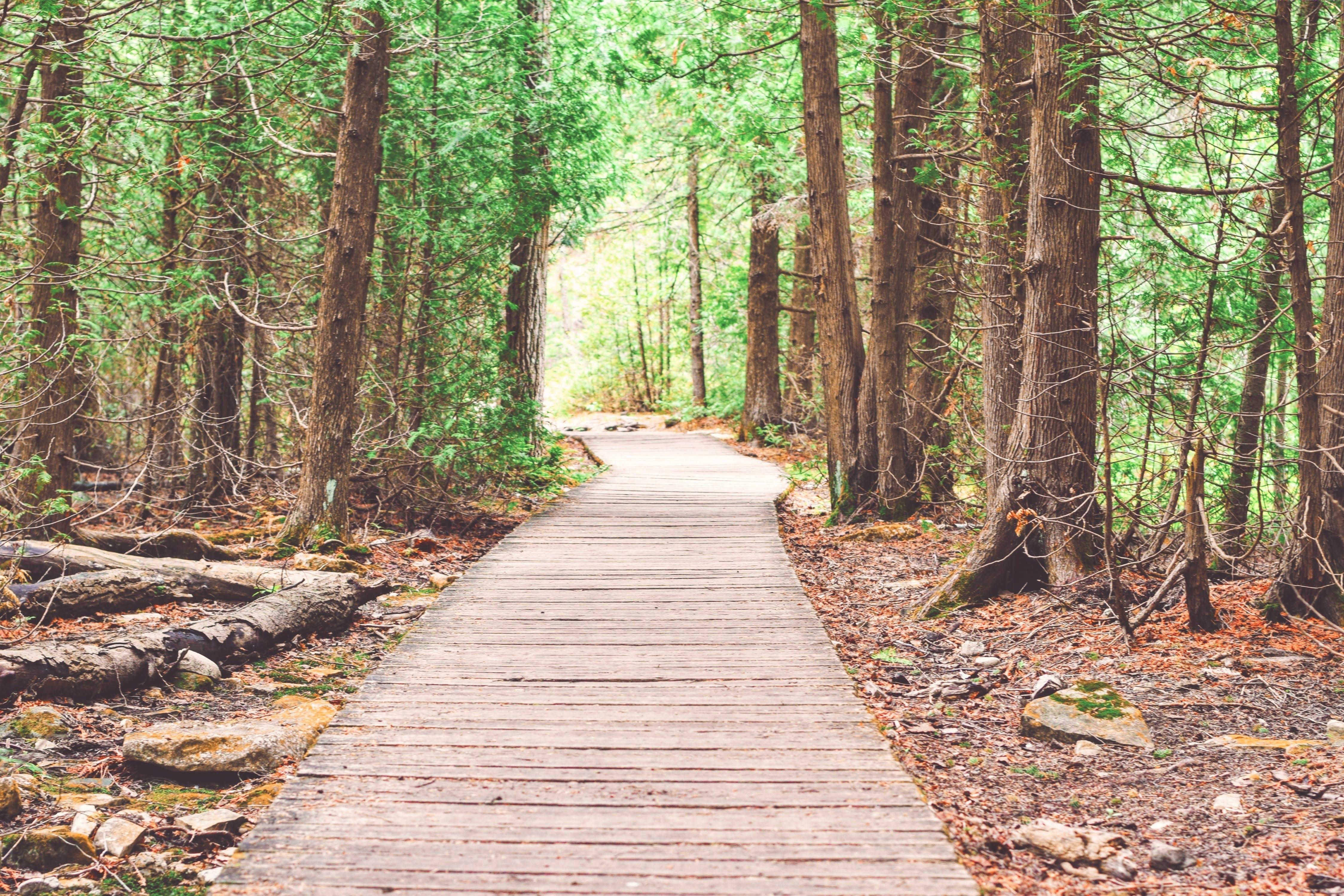 avontuur, begeleiding, bomen
