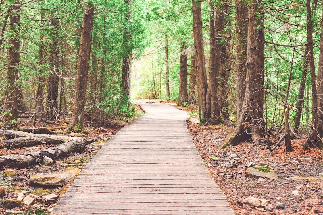 arbres, aventura, bosc