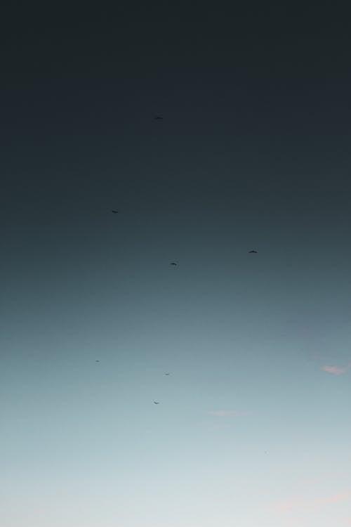 Ảnh lưu trữ miễn phí về ánh sáng, bầu trời, chim, chủ nghĩa tối giản