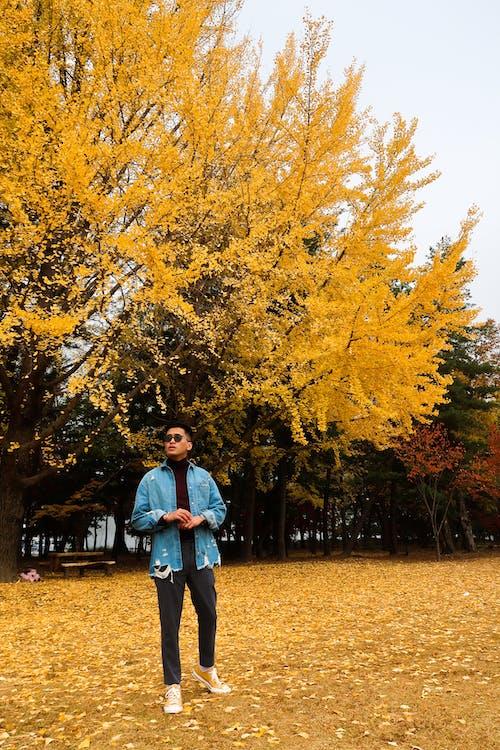 Kostnadsfri bild av gula löv, höstfärg, nami ön