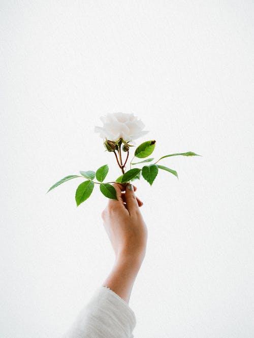 Gratis lagerfoto af blad, blomst, enkelhed, farve
