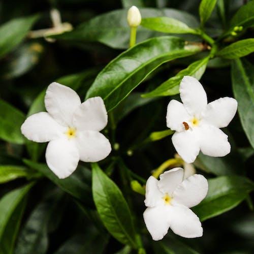 Foto De Stock Gratuita Sobre Flores Flores De Papel Pintado Fondo