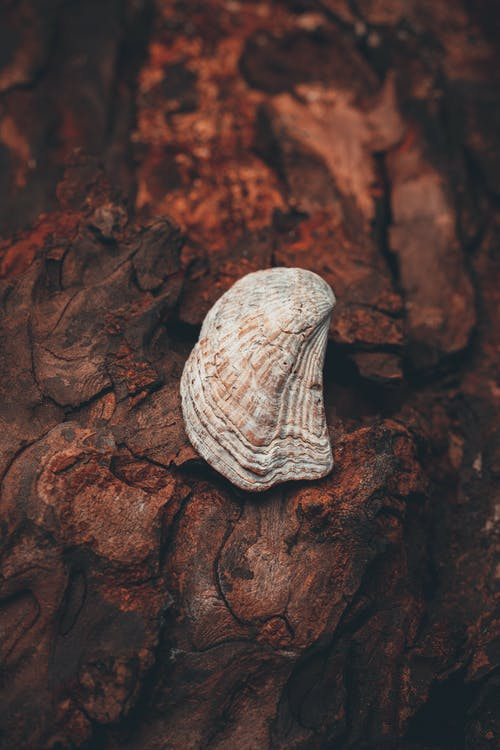 Free stock photo of See Shell, texture, tree