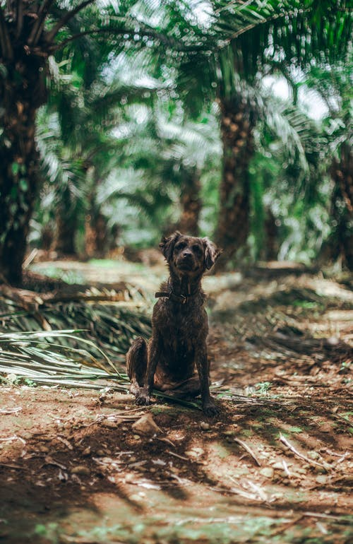 Brown Short Coated Dog on Brown Wooden Log