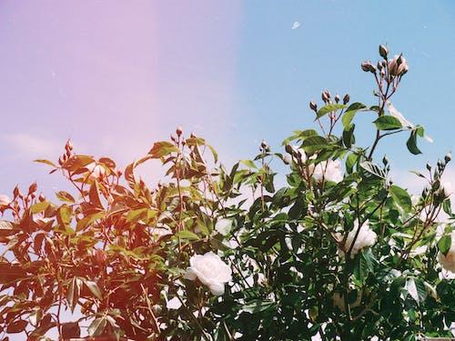 Gratis lagerfoto af blad, blomst, blomster, efterår