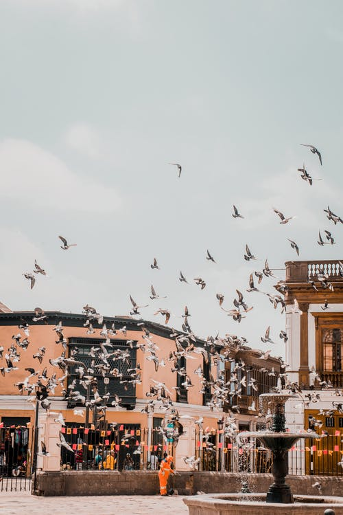 Flock of Birds Flying over the Buildings