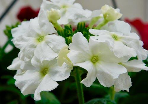 คลังภาพถ่ายฟรี ของ ดอกไม้ฤดูใบไม้ผลิ