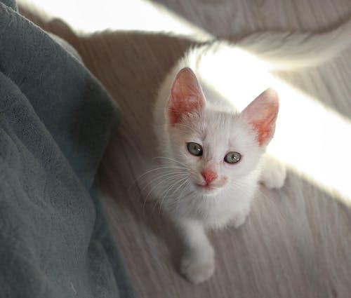 Foto d'estoc gratuïta de adorable, amistat, animal