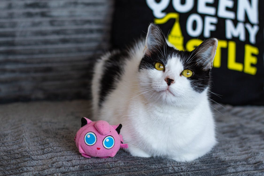 White and Black Cat Sitting Beside Pink Plush Toy