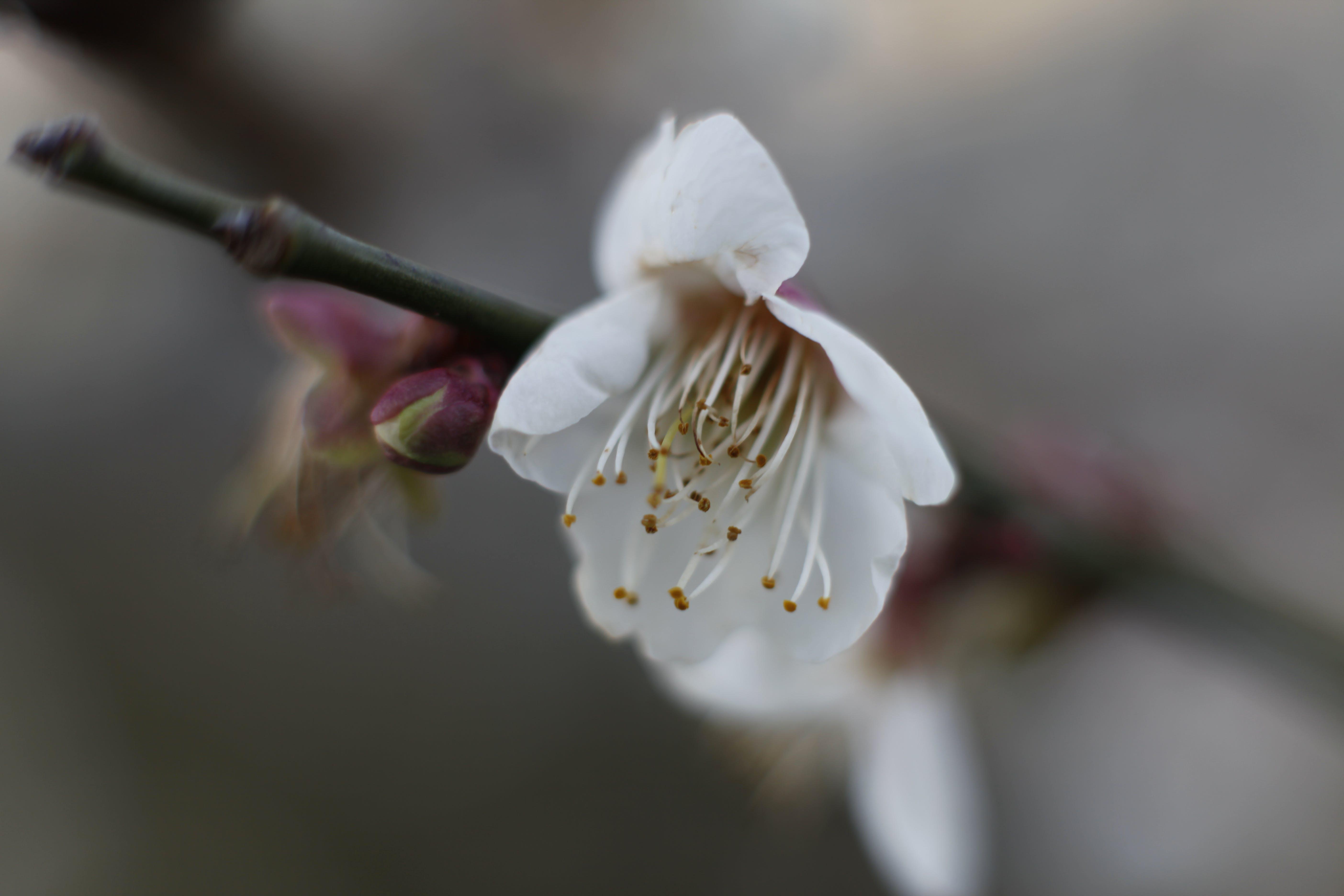 아름다운 꽃, 확대 사진의 무료 스톡 사진