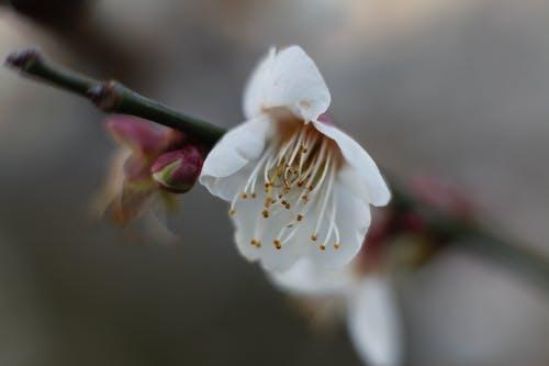 Free stock photo of beautiful flowers, macro photography