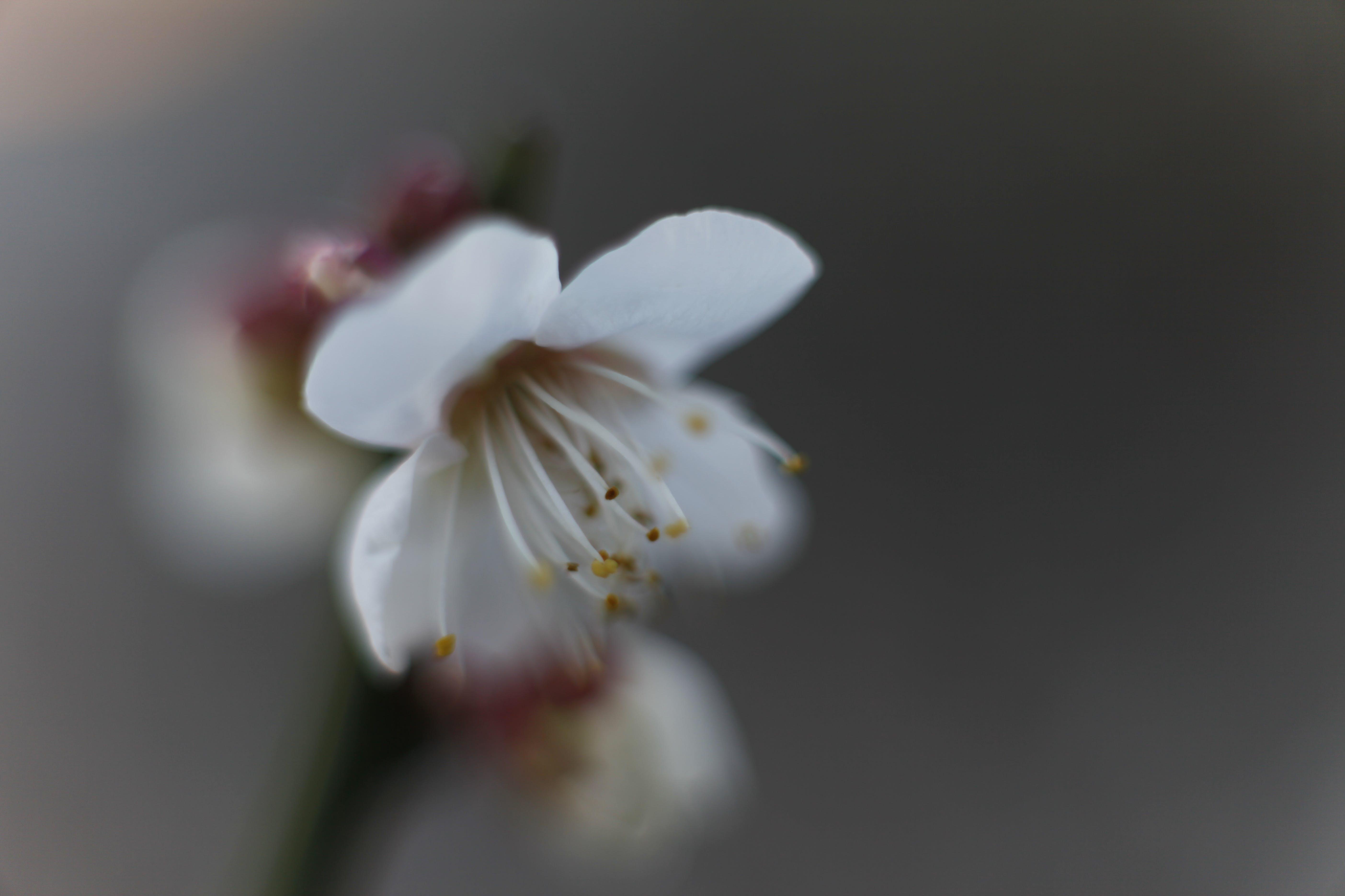 Free stock photo of bokeh, macro photography, beautiful flowers