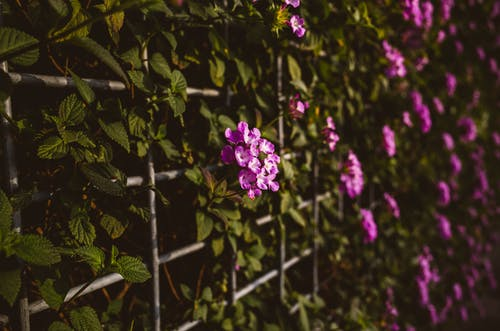 Free stock photo of floral, flower, green, leaves