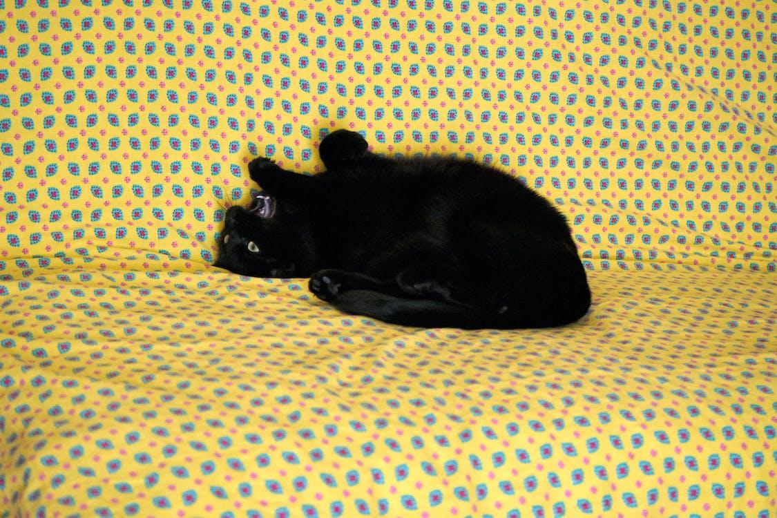 Free stock photo of animal de compagnie, chat noir, couleurs