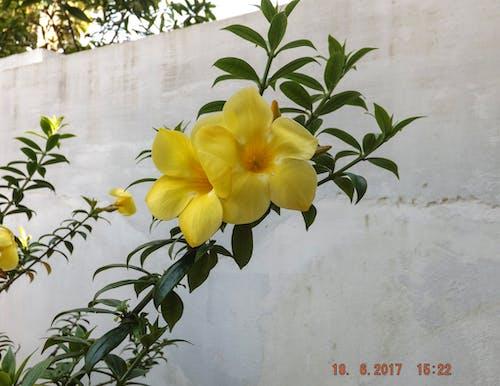 Free stock photo of hd, pc wallpaper, yellow flower