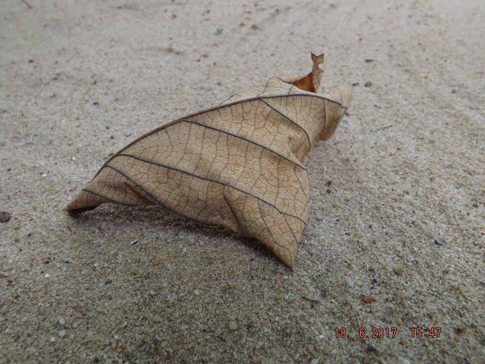 Free stock photo of dry leaf, hd, on sand