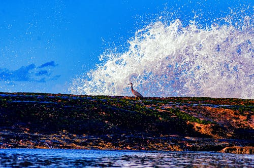 Free stock photo of background, beach, beautiful, blue