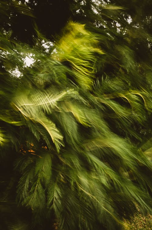 Free stock photo of green, motion, tree, windy