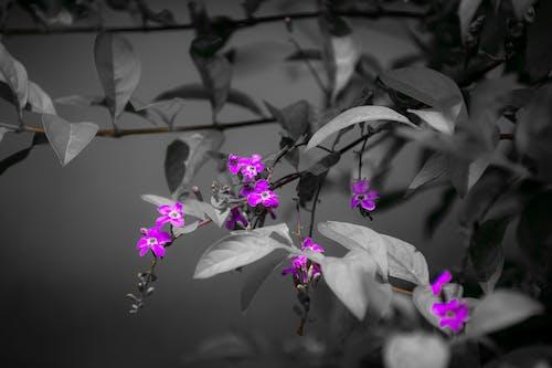 Základová fotografie zdarma na téma bw fotografie, fotografie, fotografie přírody, příroda